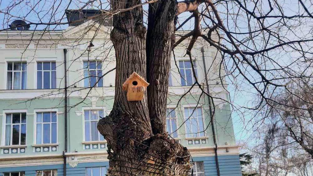 Къщички за птици в двора на ИУ – Варна